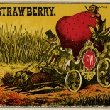 1880c_cigar_strawberry_7.5x8_dlw, Strawberry, Frederick Wambach, Cuban Cigar Labels, Lithograph, 1874, Gallery East, Gallery East Network