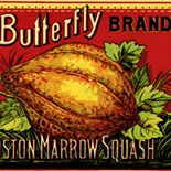 1890c_label_butterfly_squash_4.5x13.5_dlw, Butterfly Brand Squash, 1890c, Lithograph, Advertising Label, Gallery East, Gallery East Network
