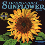 1930c_label_sunflower_oranges_11x11.25_dlw, Sunflower Oranges, 1930c, Lithograph, Advertising Label, Gallery East, Gallery East Network